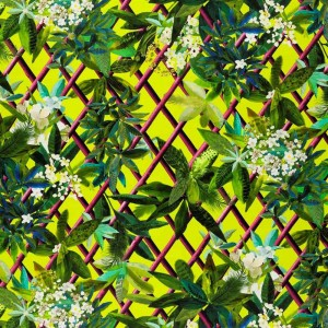Tissu Canopy Lime, Christian Lacroix