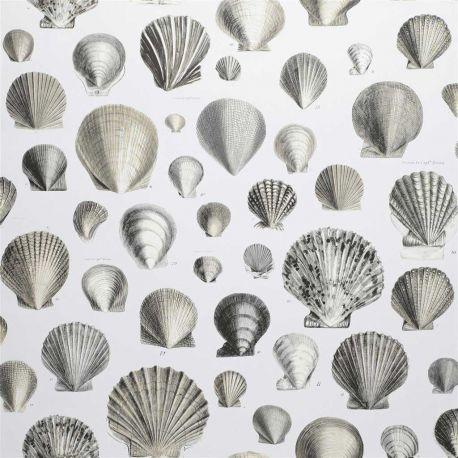 Papier peint Captain Thomas Browns Shells Oyster, John Dorian