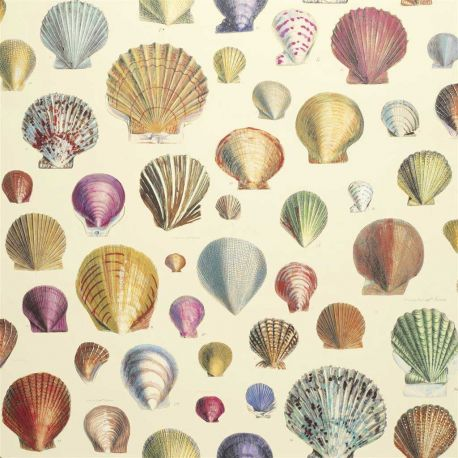 Papier peint Captain Thomas Browns Shells Sepia, John Dorian