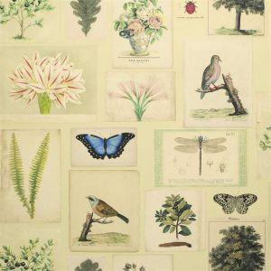 Papier peint Flora And Fauna Parchment, John Dorian