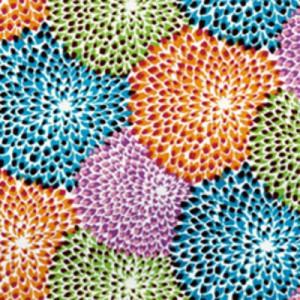 Tissu dalia b w exterieur missoni home d co en ligne for Tissu deperlant exterieur